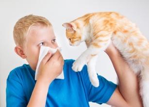 Koci przyjaciel kontra alergia