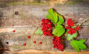 Szczególnie cenne są jej owoce i kora. Poznaj tą cudowną i zapomnianą roślinę!