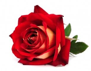 Nawilżanie skóry z różą. Prozdrowotne właściwości kosmetyków z ekstraktem z róży!