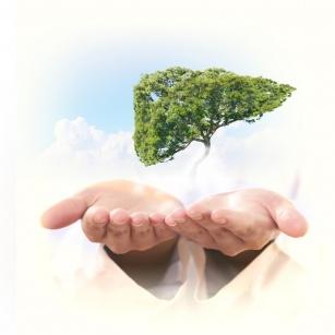 Zioła oczyszczające wątrobę – 4 polecane zioła na zdrowy detoks!
