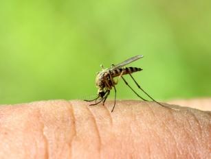 Komary - jakie choroby przenoszą komary?