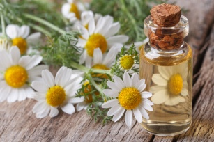 Rumianek - złote zioło dla zdrowia i urody