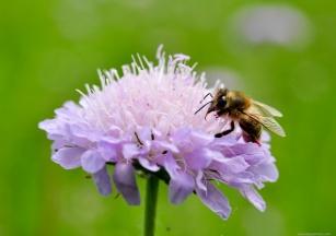 życie z alergią