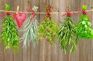 Rozmaryn, mniszek lekarski, kłącze imbiru - Przedstawiamy zioła, które złagodzą niestrawność!