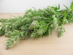 Poznaj właściwości lecznicze matki ziół czyli bylicy