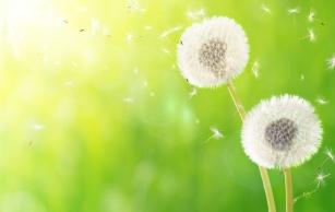 Niezbędnik każdego alergika – kalendarz pylenia