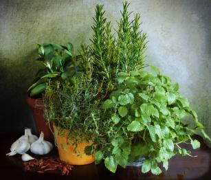 M jak mięta pieprzowa i spółka, czyli rośliny doniczkowe korzystne dla zdrowia!