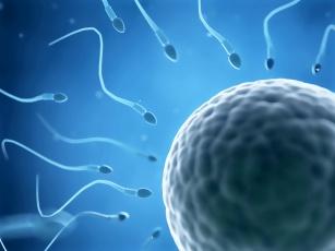 Tajemnica naszej płodności - diagnostyka prenatalna