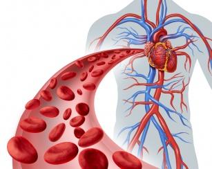 Jak usprawnić krążenie krwi i ustrzec się przed chorobami serca? 10 porad jak tego dokonać!