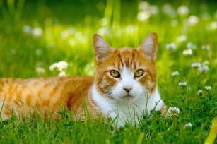 Kot alergika. Czy to na pewno uczulenie na sierść?