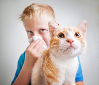 Czworonożny problem. Alergia na kota – jak sobie z nią radzić?