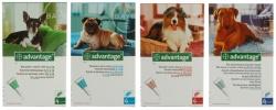 Advantage zapobiega i zwalcza inwazje PCHEŁ u psów, 4 pipetki