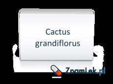 Cactus grandiflorus