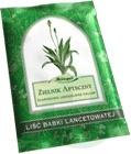 Zielnik Apteczny-liść babki lancetowatej